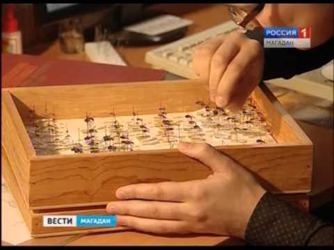 Магаданский энтомолог Николай Тридрих надеется, что обнаружил пять новых видов насекомых