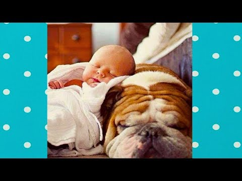 Dog loves Baby   Daily Dose Of Laughter With Dog And Baby