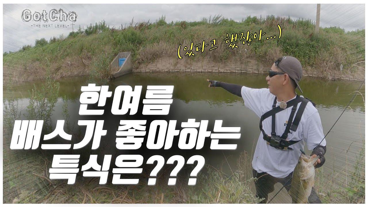 배스도 이건 못 참지!! 탑워터를 뽝!!! [feat.박성완] ep.36_korea bass