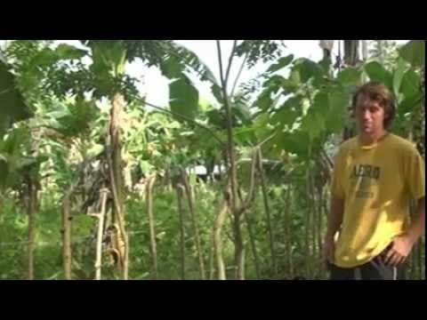 Mindanao Philippines - Living Fence 1 of 2