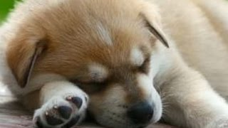 Music To Look At A SLEEPY PUPPY To (This puppy is mad & he's not going to take it anymore!)