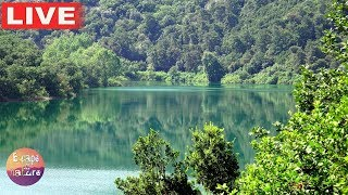 Relaxing lake sounds - Calming forest bird song and gentle lake waves for Meditation & Sleep -- Live