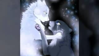 Коты Воители.Звездное племя