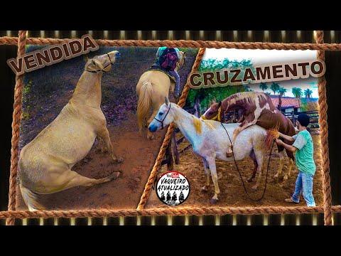 Cavalo Enxertando Égua + Novo Dono Da Égua