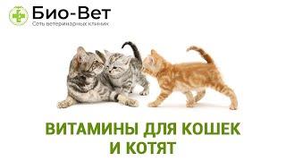 Витамины для кошек и котят, какие необходимы и как давать