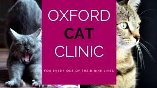 Oxford Cat Clinic  Marston