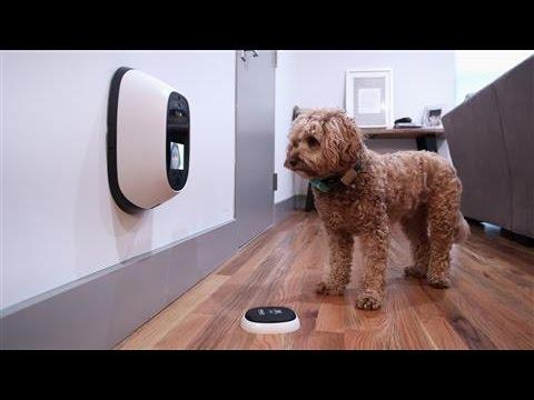 Pet Tech, Reviewed