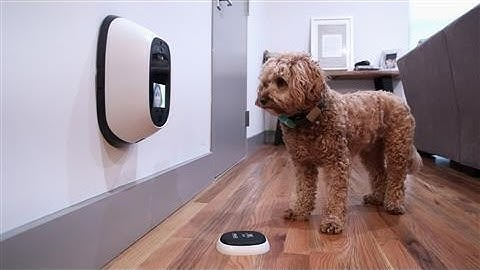 Pet Tech, Reviewed by a Dog