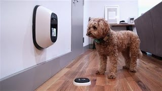 Pet Tech, Reviewed by a Dog thumbnail