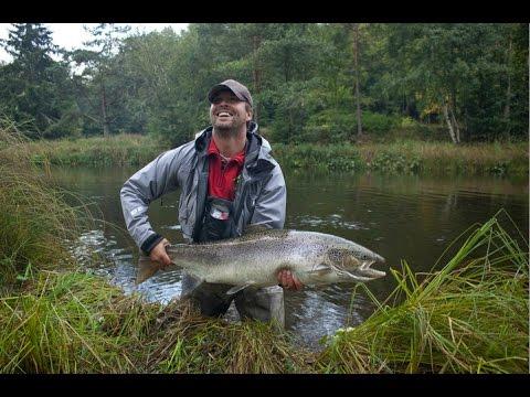 15 kilos salmon in river Mörrum
