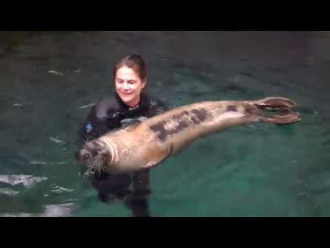 Swim therapy with Sterling the elderly seal