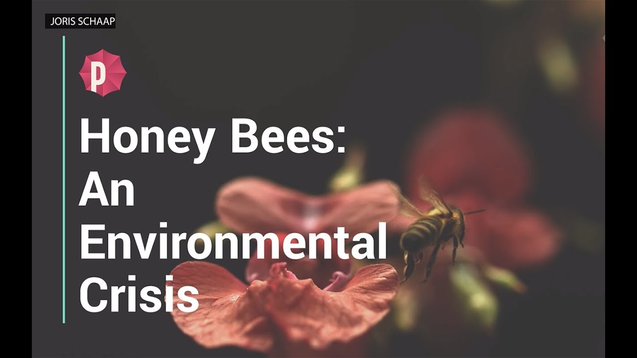 Honey Bees: An Environmental Crisis