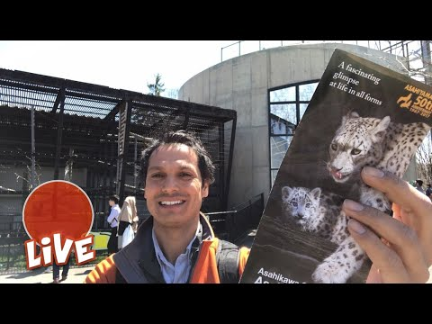 Asahiyama Zoo is Wild ☆ LIVE #19