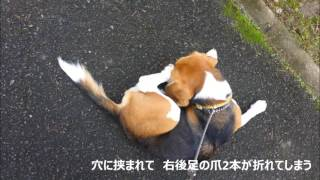 兵庫県相生市にある感状山城へ 石垣の残る素晴らしい城跡だが、下山時、...