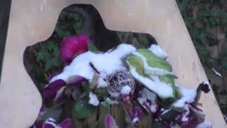 RAAD-VIDEO Dalfsen [13] - mooie bloemen, maar waar