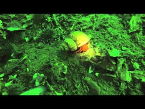 Hull dive on NOAA Ship Oscar Dyson