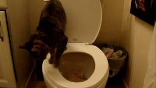 1/2 Toilet Training Zoe - Day 7 (poop) (HD)