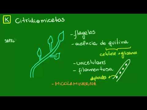 Citridiomicetos e Zigomicetos - Diversidade dos Seres Vivos - Biologia