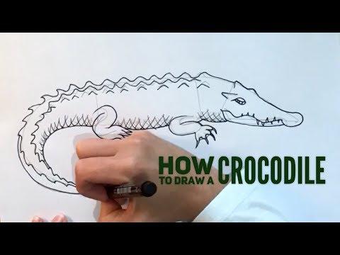 Beginners' - How To Draw A Crocodile