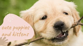 FUNNY CAT & DOG VIDEOS COMPILATION #3