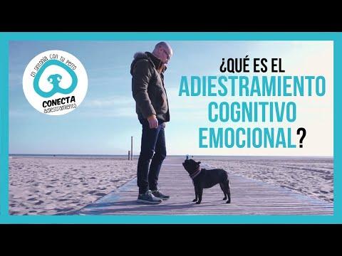 adiestramiento-cognitivo-emocional-canino,-¿qué-es?-[etologia-canina]