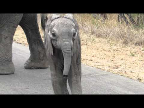Elephant with small baby, amazing interaction and behaviour..