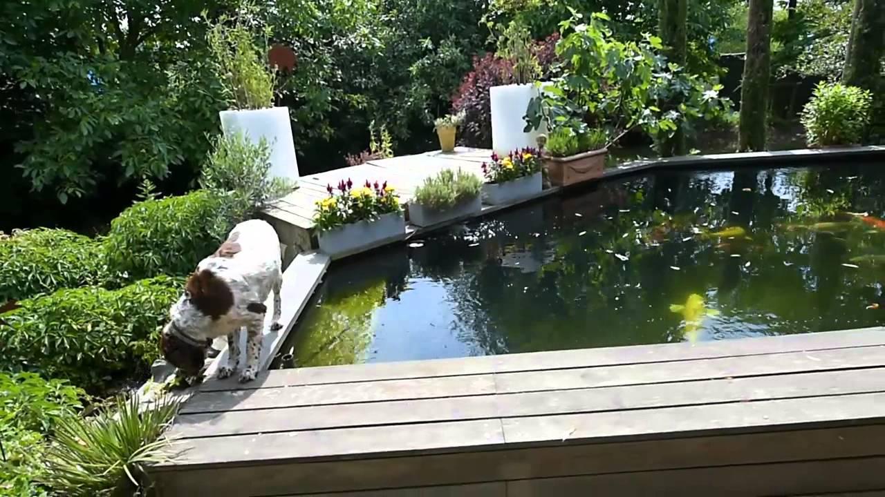 Modern Koi Blog #276   Makoto In Germany: Teich Mit Schön Verrückter Form