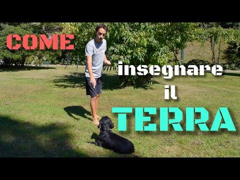 Come insegnare al cane il TERRA