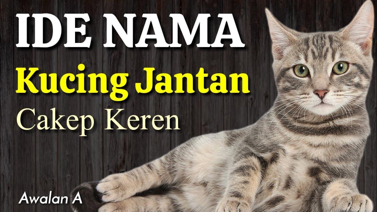 Keren Ide Nama Kucing Yang Bagus Dalam Islam Nama Anak Kucing Jantan Lucu Bahasa Arab Awalan A Youtube