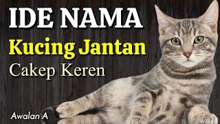 Nama Anak Kucing Jantan Lucu Bahasa Arab Awalan A