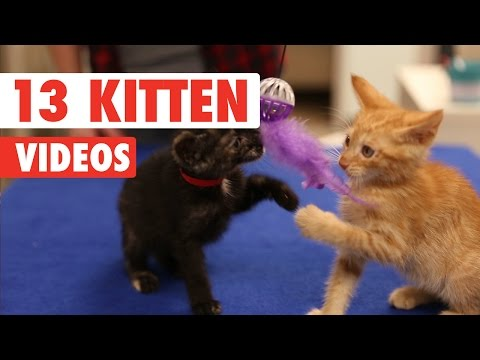 13 Funny Kitten Videos Compilation 2016