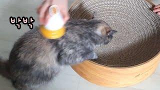 등목하는 고양이