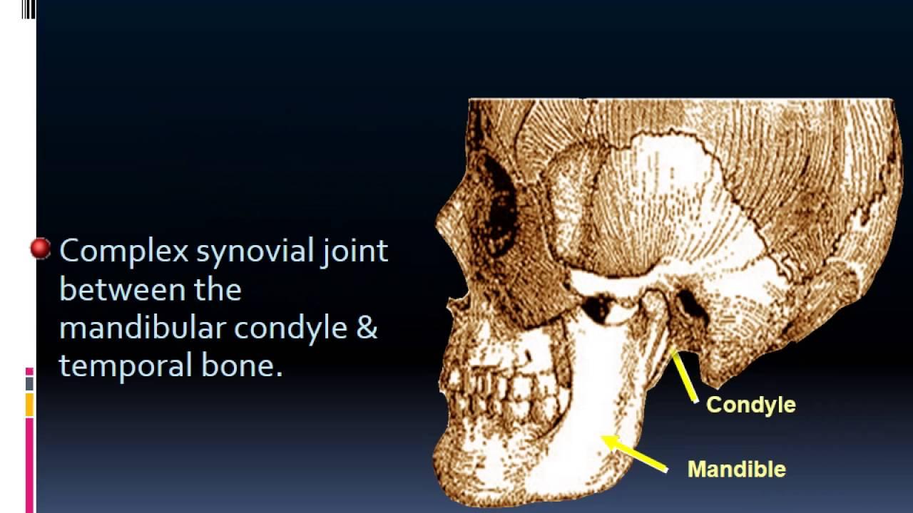 MRI TEMPOROMANDIBULAR JIONT ANATOMY Dr Ahmed Esawy - YouTube