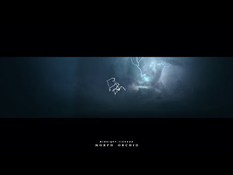 𝐌𝐨𝐫𝐩𝐡 𝐎𝐫𝐜𝐡𝐢𝐝 - Midnight Lioness