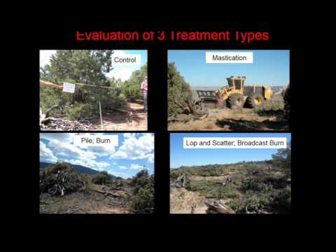 Plant Community & Soil Response to Fuels Reduction Treatments: Upland Woodlands, Colorado Plateau