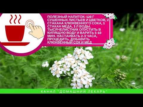 Тысячелистник: лечебные свойства и противопоказания - Домашний лекарь - выпуск №83