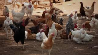 Charity that hurts   Rwandan eggs   Poverty Inc   Anthony Farajallah