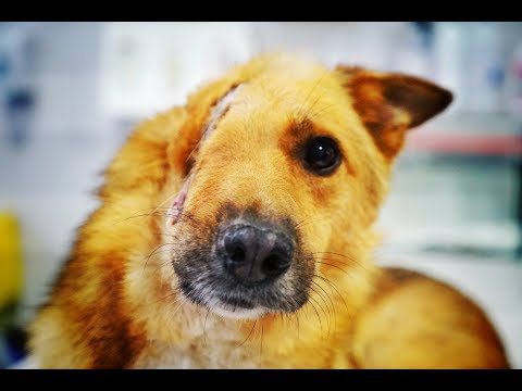 DOG WITH HALF A FACE DESPERATELY SEEKS HELP! PLEASE SHARE!