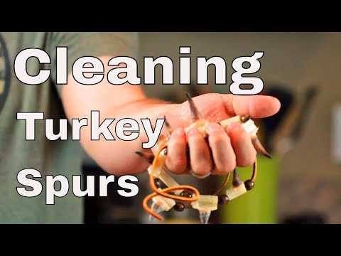 Cleaning Turkey Spurs