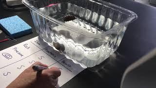 STEM Sink or Float?