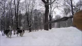 Moja pasja - psie zaprzęgi