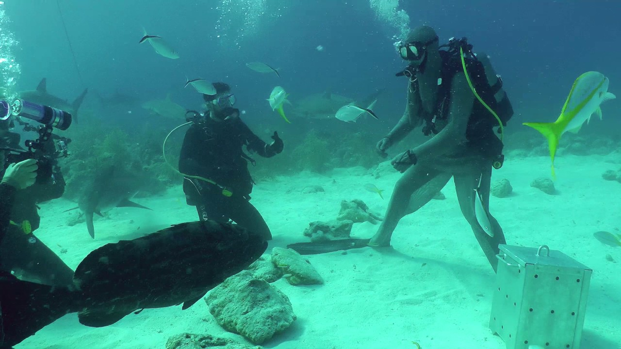 Bahamas 2015 : Immobilté Tonique