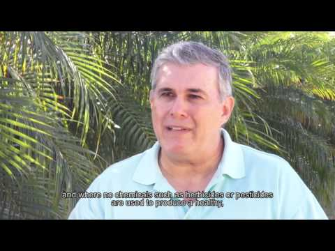 Panama Embraces Controlled Environment Agriculture (Spanish)