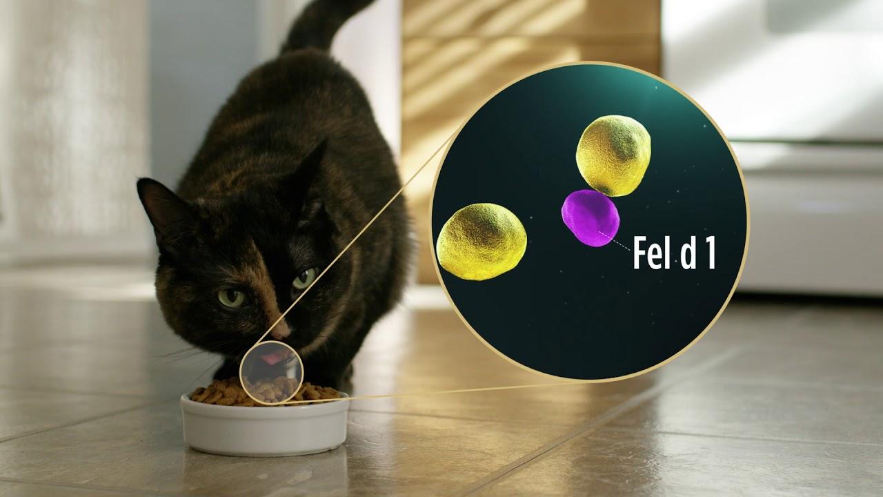 Réduction des allergènes du chat - Une solution est possible !