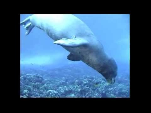 Hawaiian Monk Seal R307 @ Molokini Island Maui Hawaii Part One