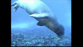 Hawaiian Monk Seal R307 @ Molokini Island Maui Hawaii Part One