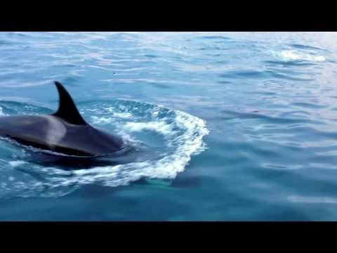 Whale Watching (Orcas), Nunavut #explorecanada