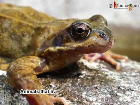 Science - Different  Types of Animal based on  Habitat (Animal Habitats) - Overview  -  English