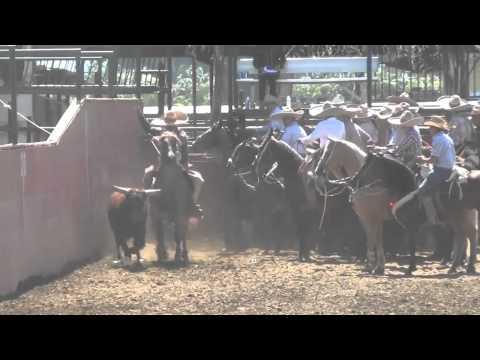 Resumen Coleadero El Viejon de Mira Loma. Sábado 30 de Junio 2012
