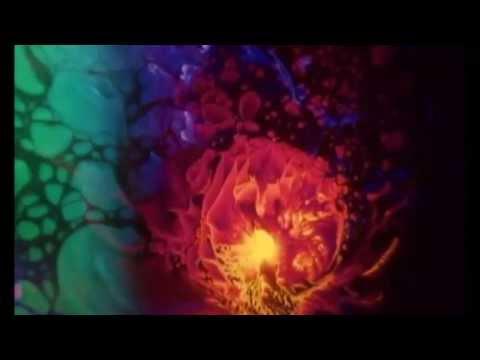Brave Black Sea -  The Five Visitors (Official Lyric Video)